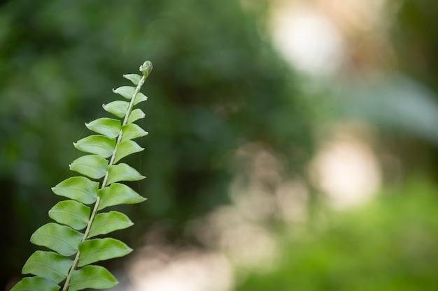 Belle fougère verte laisse avec un arrière-plan flou