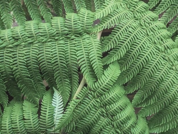 Belle fougère verte laisse dans la nature.