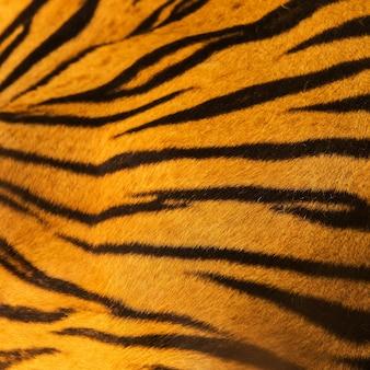 Belle fourrure de tigre - texture colorée avec orange, beige, jaune et noir