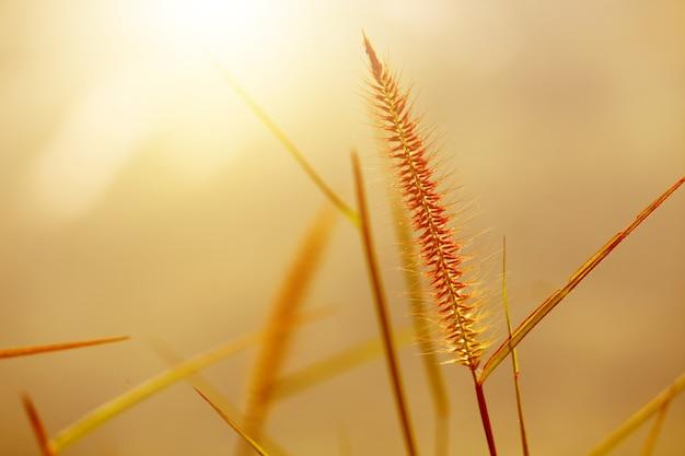 Belle herbe sèche au coucher du soleil sur la montagne. paysage naturel sous la lumière du soleil.