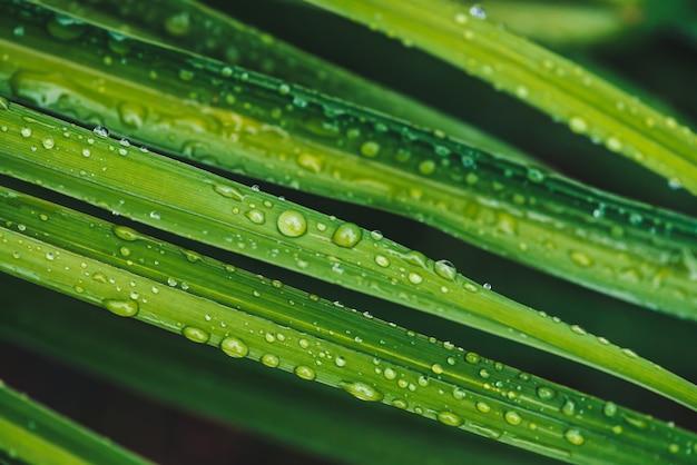 Belle herbe verte brillante vive avec des gouttes de rosée