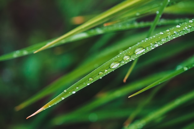 Belle herbe verte brillante vive avec rosée tombe gros plan avec l'espace de la copie.