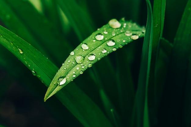 Belle herbe verte brillante vive avec rosée tombe gros plan avec espace copie