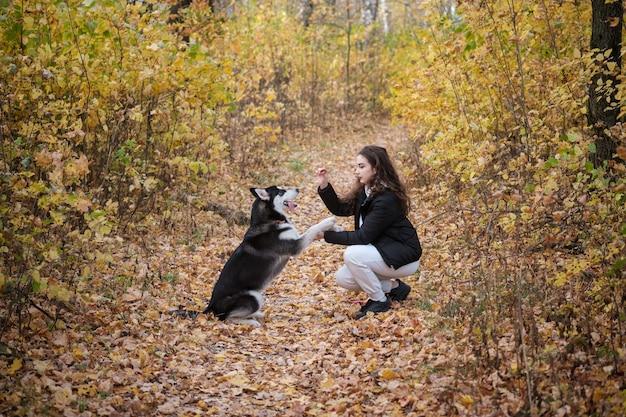 Belle jeune femme se promène avec un chien husky sibérien dans un magnifique parc d'automne au feuillage jaune