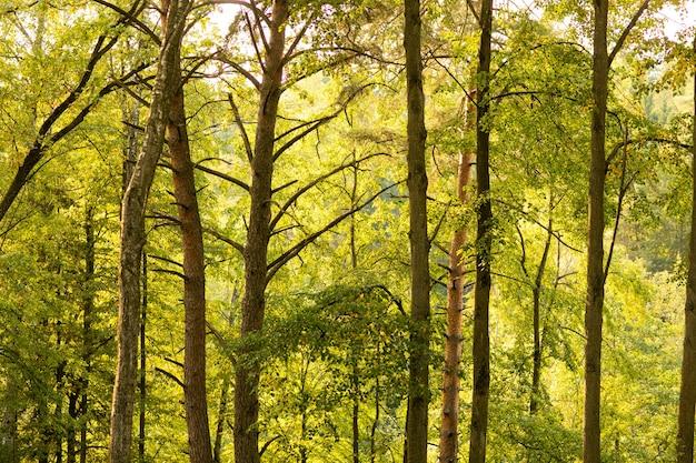Belle journée ensoleillée dans la forêt d'automne, orangers jaunes