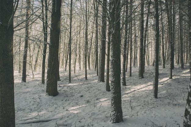 La belle journée ensoleillée dans le parc d'hiver