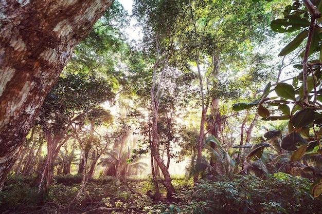 Belle jungle tropicale verte