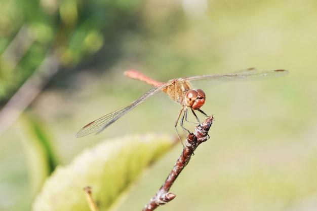 Belle libellule dans la forêt