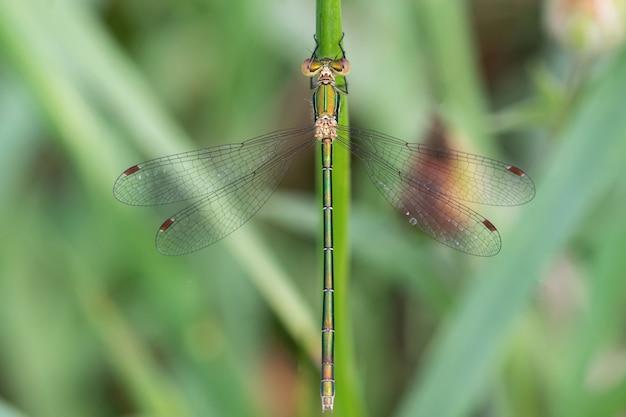 Une belle libellule verte avec de grands yeux se repose sur une branche sèche
