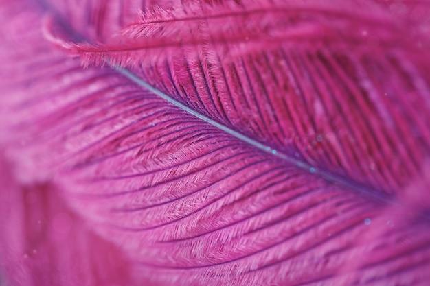 Belle lumière abstraite et fond doux flou avec plume violette