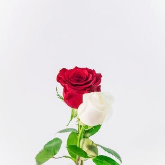 Belle lumière fraîche et fleurs rouges