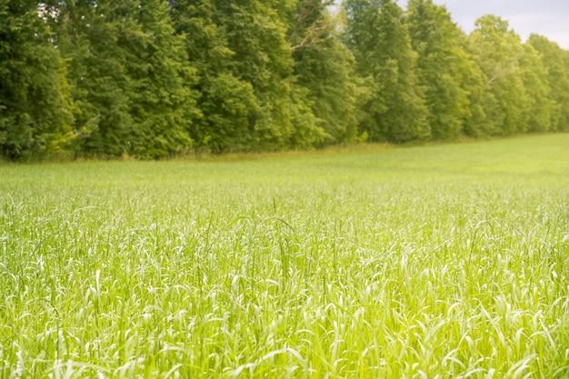 Belle lumière matinale dans un parc public avec champ d'herbe verte et arbre