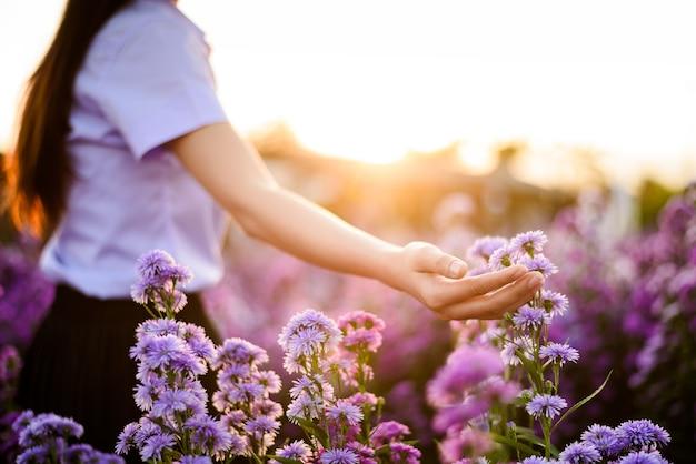 Belle main de femme tenant une fleur violette dans le jardin au coucher du soleil