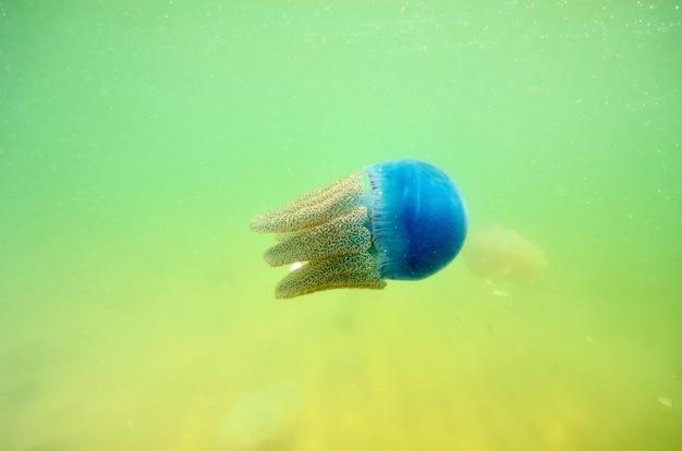 Belle méduse dans la mer de thaïlande (vue sous-marine)
