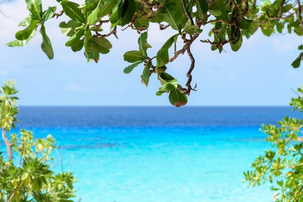 La belle mer bleue regardant à travers les brindilles et les feuilles vertes des plages de l'île de koh miang est une attraction célèbre pour la plongée dans le parc national de mu ko similan, province de phang nga, thaïlande