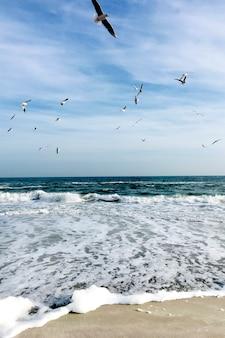 Belle mer avec des mouettes dans le ciel.