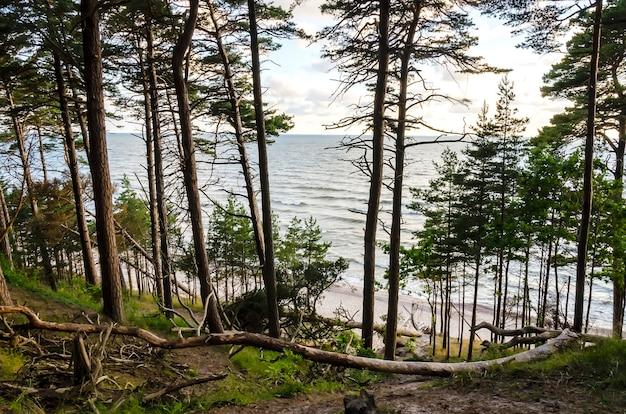 Belle mer avec des vagues et plage de sable avec des arbres tombés