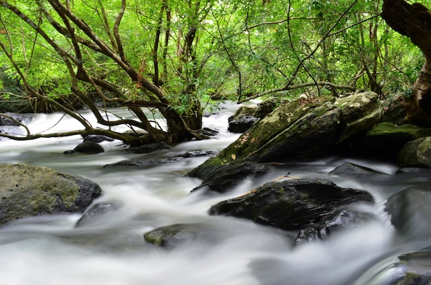 Belle montagne et cascade dans la forêt