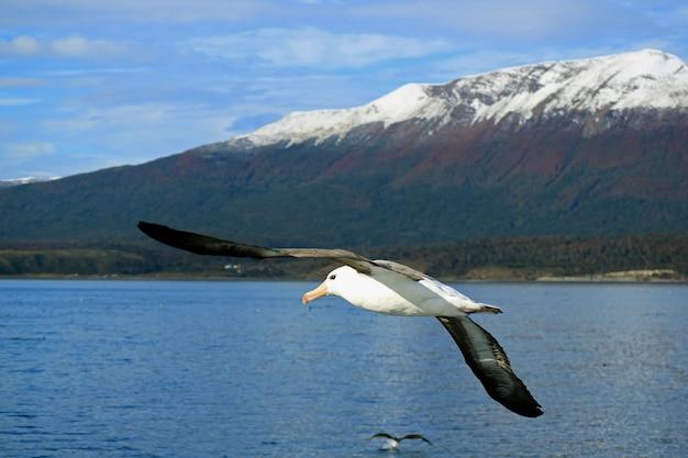 Belle mouette volant avec bateau de croisière sur le canal beagle