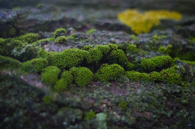 Belle mousse verte poussant sur le vieil arbre dans la forêt