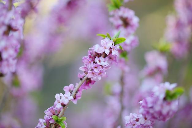 Belle nature florale et fleurie