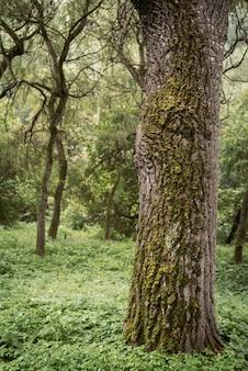 Belle nature. gros plan de la mousse verte sur un arbre