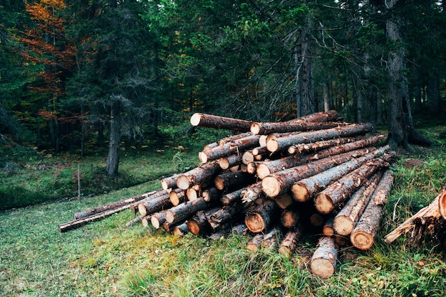 Belle nature. grumes en bois fraîchement récoltées empilées en tas dans la forêt verte
