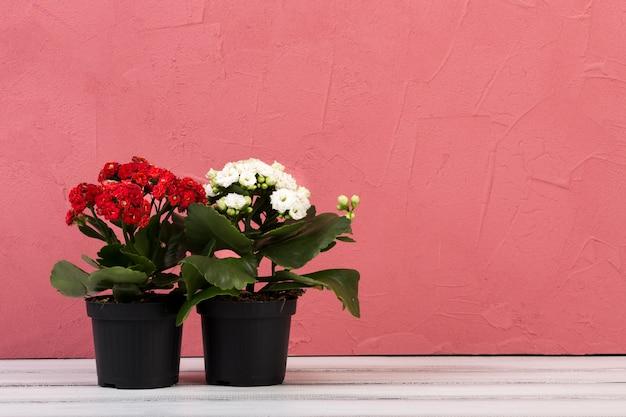 Belle nature morte florale