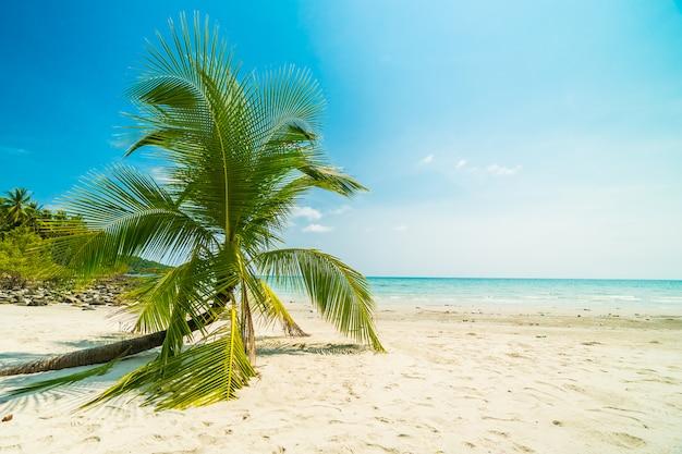 Belle nature plage tropicale