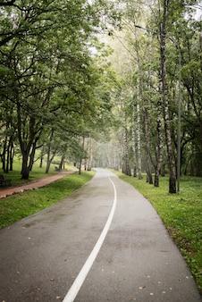 Belle nature. route dans la forêt brumeuse verte