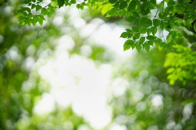 Belle nature vue feuille verte sur fond de verdure floue sous la lumière du soleil avec bokeh et espace copie