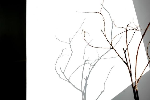 Belle ombre d'une branche par temps ensoleillé.