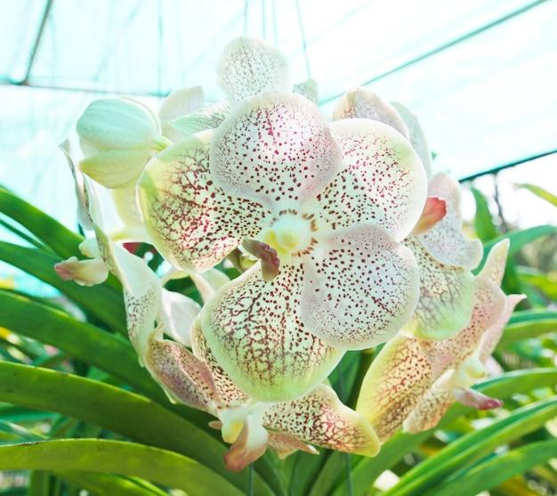 Belle orchidée dans le jardin