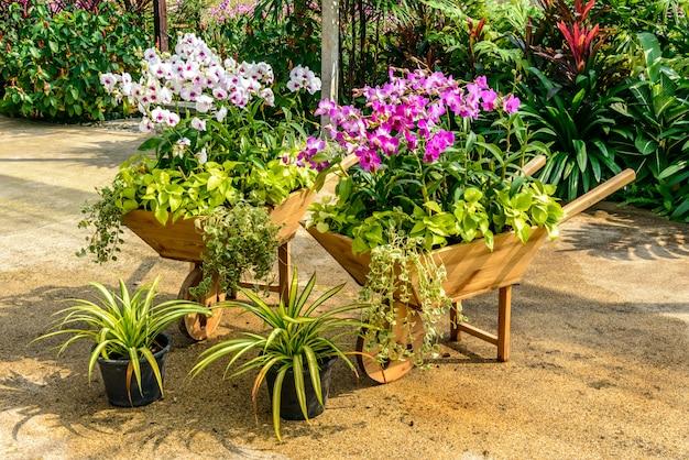 Belle orchidée du jardin