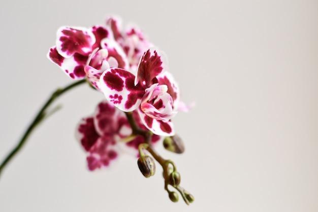 Belle orchidée sur fond blanc