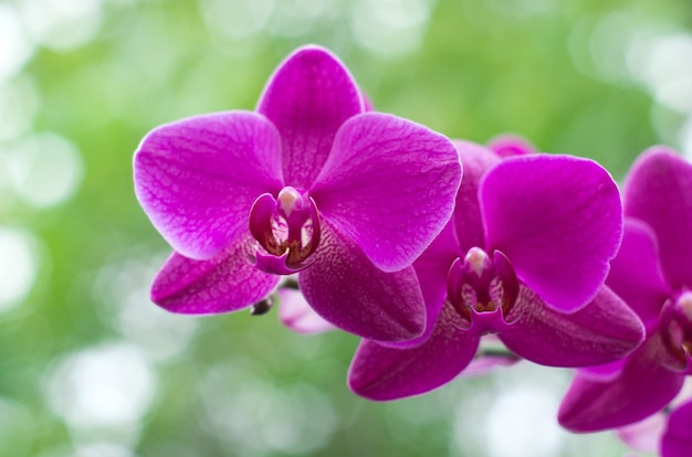 Belle orchidée sur fond vert