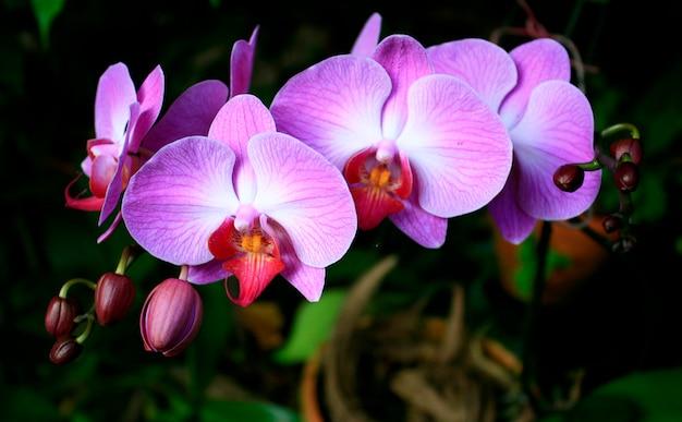 Belle orchidée mauve