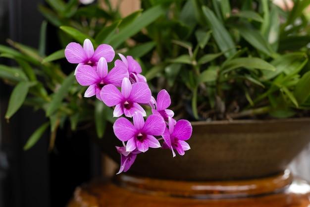Belle orchidée pourpre qui fleurit dans le jardin.