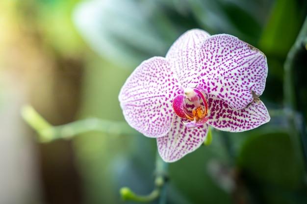 Belle orchidées en forêt