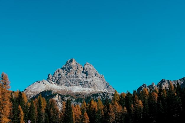 Belle parcelle d'arbres jaunes et verts avec montagne et ciel bleu