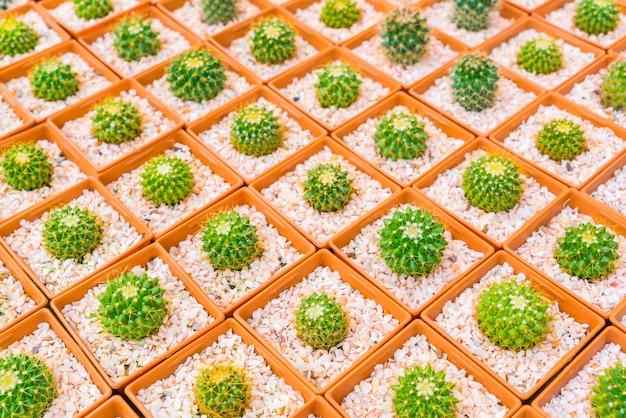 Belle petit champ de cactus.