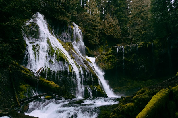 Une belle petite cascade dans une forêt formant une rivière