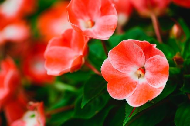 Belle petite fleur rouge dans le jardin,