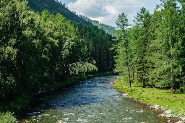 Belle petite rivière de montagne aux eaux claires en forêt parmi une riche flore en journée ensoleillée.