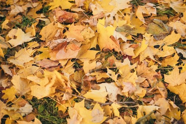 Belle photo d'automne pour le fond orange d'automne sur la carte d'automne lumineuse de l'herbe verte...