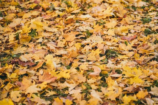 Belle photo d'automne pour le fond orange d'automne sur l'herbe verte