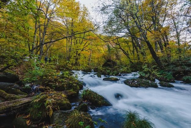 Belle photo d'une cascade dans un ruisseau entouré d'une forêt