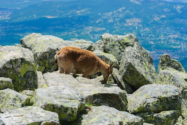 Belle photo d'un cerf de virginie dans les montagnes rocheuses