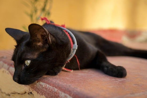 Belle photo d'un chat noir allongé sur la surface de la pierre dans la rue par une journée ensoleillée