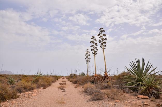Belle photo d'un chemin de terre dans les îles canaries avec un ciel nuageux
